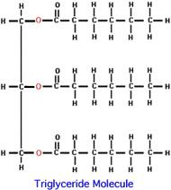triglyceride (1)